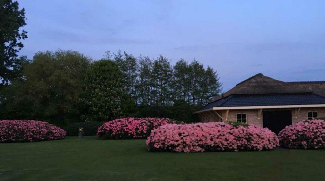 Rhododendronwolken in Barneveld