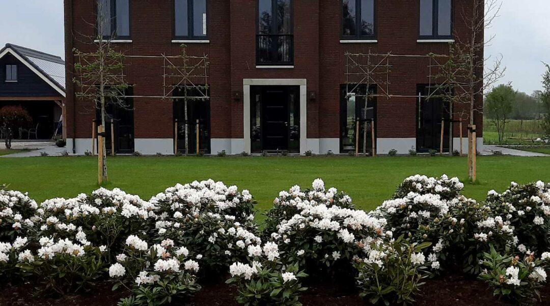 Diverse projecten met rhododendrons